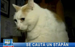 Pisica obeză din new Jersey