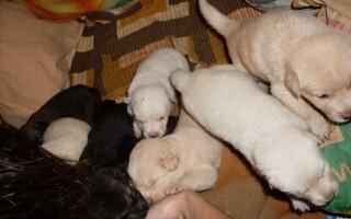 Catei pentru adoptie