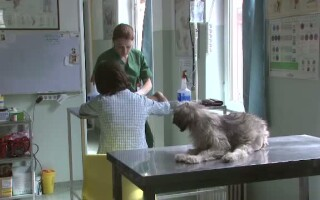 Sterilizare