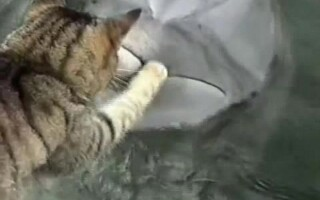 pisica si delfin