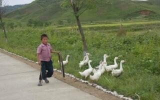 autostrazi coreea de nord - 6