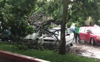 furtuna in Bucuresti