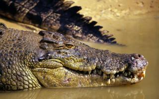 O fetiță de doi ani, ucisă de crocodilii crescuți de tatăl său
