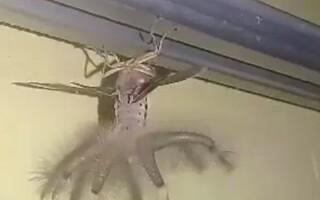 """O creatură """"desprinsă dintr-un film SF"""", surprinsă într-o casă de vacanță"""