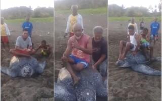 Broască țestoasă pe cale de dispariție, chinuită de mai mulți bărbați, în Indonezia