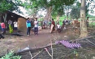 Fetiță de 7 ani ucisă de un elefant, în India
