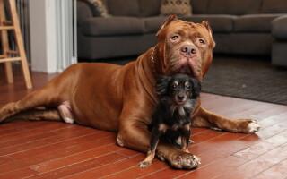 A fost demontat mitul că un an din viața unui câine e echivalent cu șapte ani la om. Care e realitatea