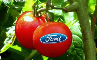 rosii cu logo Ford pe ele