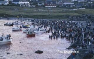 vanatoare balene