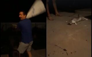 Constănţean filmat chinuind o pisică, băgată într-un sac