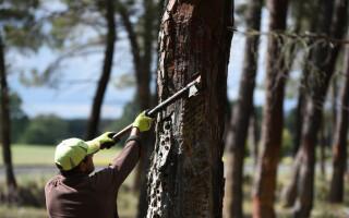 Avocatul Poporului investighează situația a sute de români care s-au accidentat sau au murit în pădurile din Austria