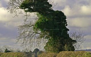 copac in forma de dinozaur