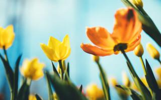 mesaje de florii