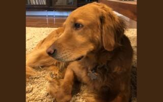 Cum a reușit un câine să salveze o familie întreagă