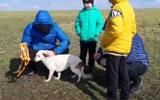 Cum au salvat doi copii din Vaslui un cățel căzut într-o fosă septică. VIDEO emoționant