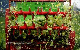 Castraveti cu E-coli, distrusi in Germania