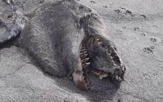 cadavru monstru, balena