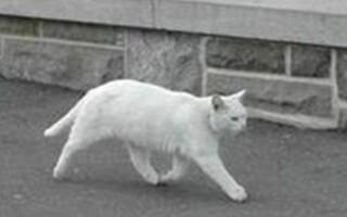 pisica intreaga