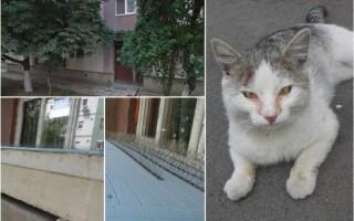 capcane pisici