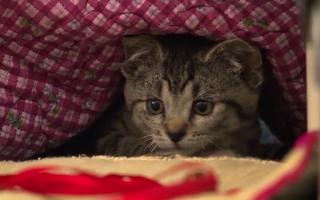 Pisicuță salvată dintr-un tomberon