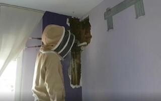albine dormitor