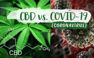 (P) Canabisul Medical Reduce Infectarea cu Coronavirus? Studiu realizat în Alberta
