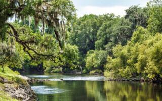 """Descoperire incredibilă într-un râu din Florida. """"E o călătorie în timp"""""""