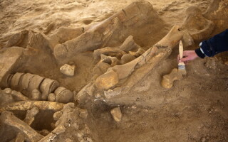 fosila mamut, Paris