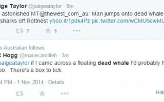 Balena rechin