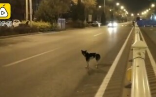câine China