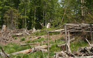 Harghita: sase barbati, anchetati pentru furt de lemne