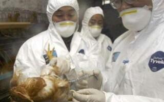 Virusul gripei aviare s-a intors in Europa