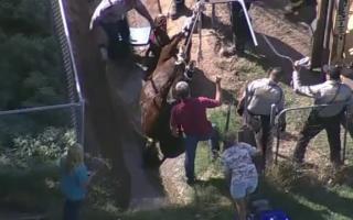 misiune de salvare a unui cal