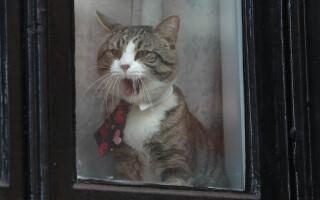 pisica lui Assange