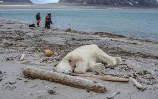 urs ucis norvegia