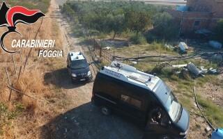 Un român şi-a făcut plantaţie de marijuana pe un teren viran din Italia