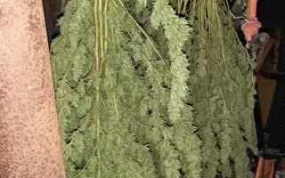 Grupare de traficanţi de droguri, în Mehedinți