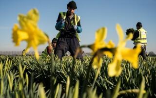 Romania la munca in Marea Britanie