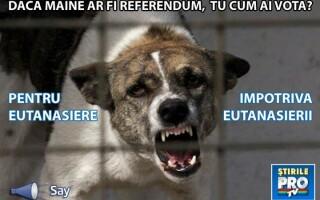 carton eutanasiere - pro si contra