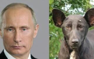 catel care seamana cu Putin