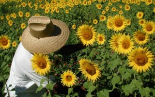 Site- ul de dating floarea- soarelui 79)