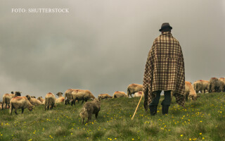 cioban cu oi pe o pajiste in ROmania