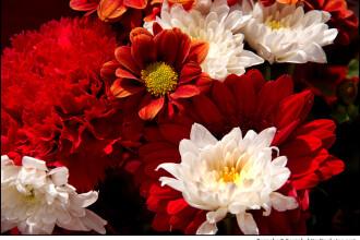 Marele targ al florilor in parcul Cismigiu!