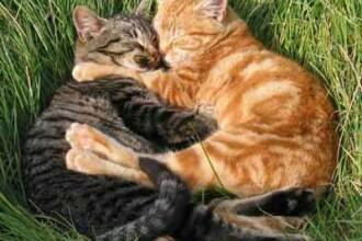 O inventie mieunata! Pisicile unui programator roman, monitorizate non-stop
