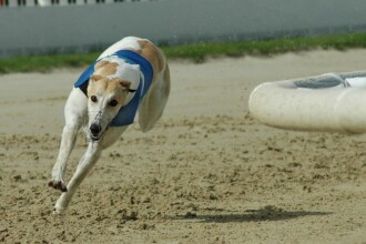 Cadou de Craciun pentru cei mai greu incercati caini din lume