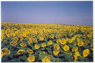 UE investeste milioane in agricultura bio romaneasca