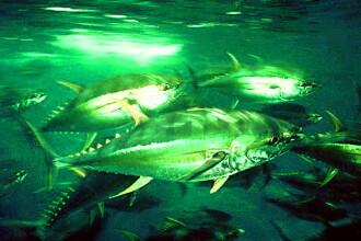 Pestii mutanti de langa Fukushima. Radiatiile atomice nasc monstri