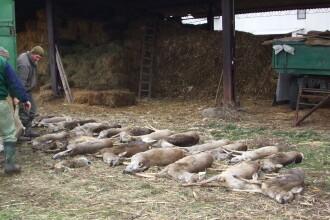 A trecut un an de la masacrarea a sute de caprioare, dar nu exista vinovati. Ce spun anchetatorii