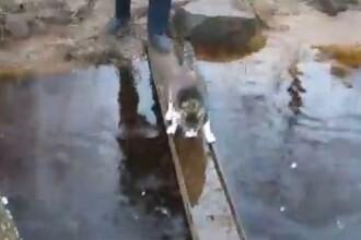 CLIPUL ZILEI pe internet. Pisica supraponderala, in lupta cu apa :)