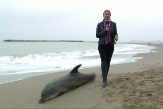 Trei delfini morti, adusi la mal de valuri. Autoritatile cred ca au fost ucisi de plasele pescarilor